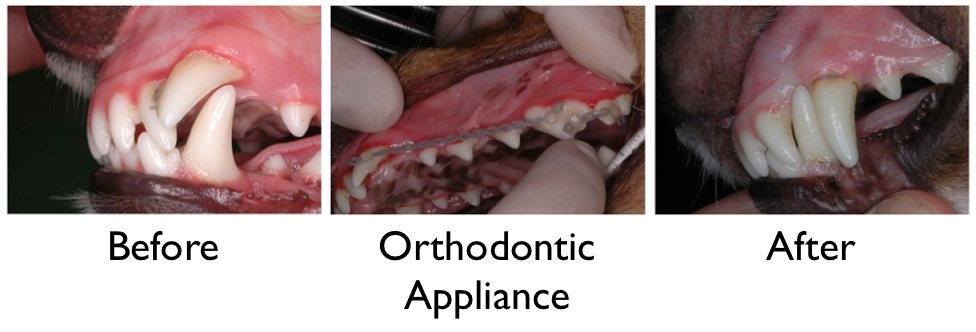 Orthodontics Image